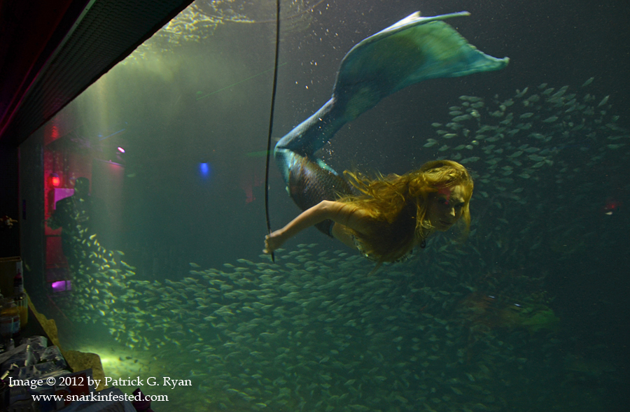 2012 rnc tampa fl a snark eyed recap snarkinfested for Fish tank mermaid