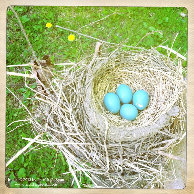 Bird's Nest 4 Eggs*