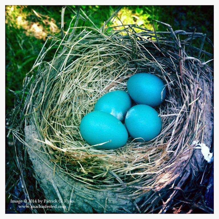 Nest *21