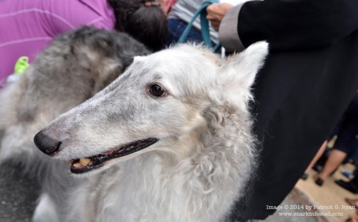 Dog *4635