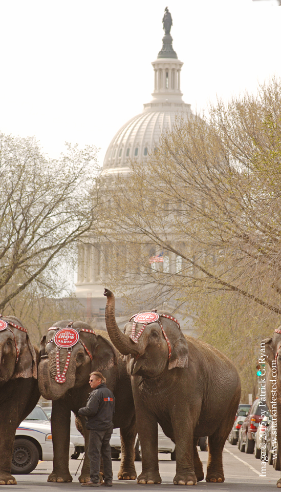 2006 Elephant Walk*0043