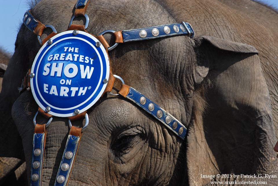 2011 Elephant Walk* 0309